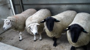 New tups purchaced October 2014
